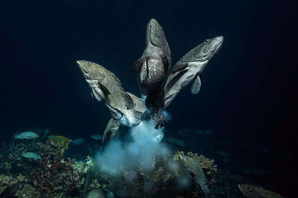 石斑鱼有几种 有几种类型的比如