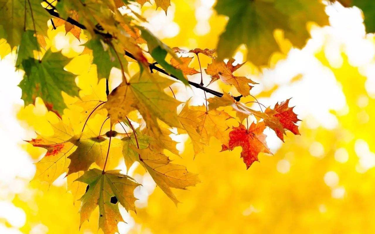 天气晚来秋的上一句 快来积累知识吧