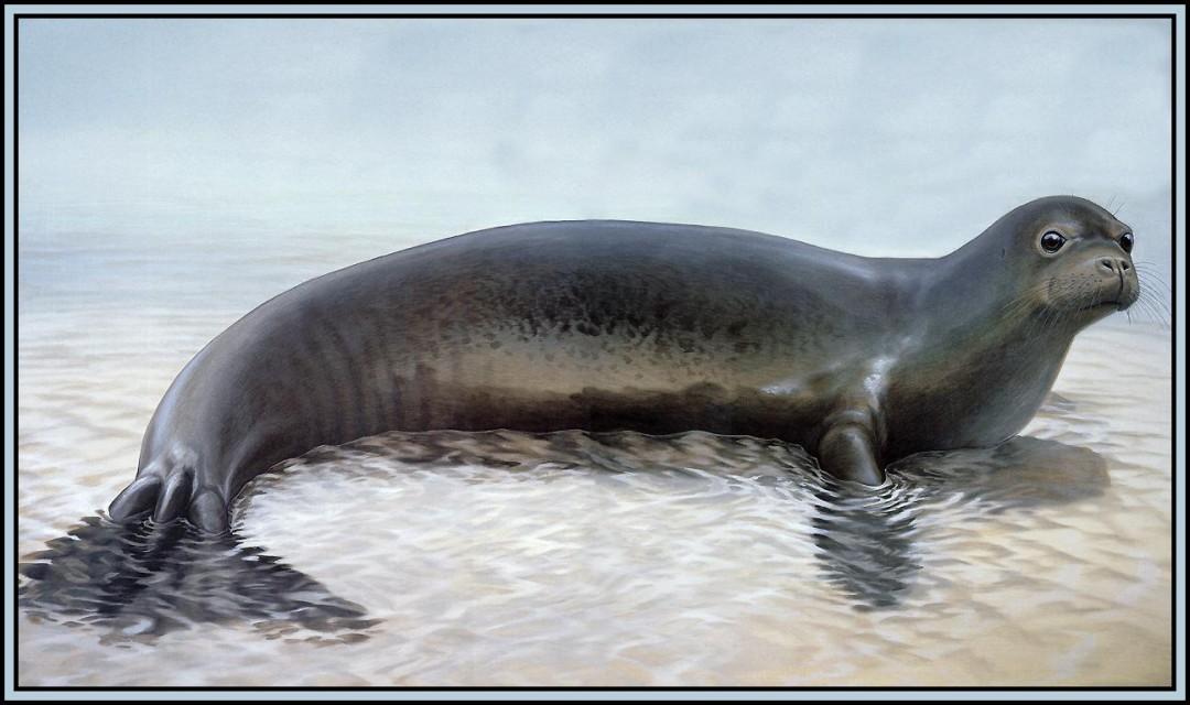 海洋生物有哪些 哪些属于海洋生物