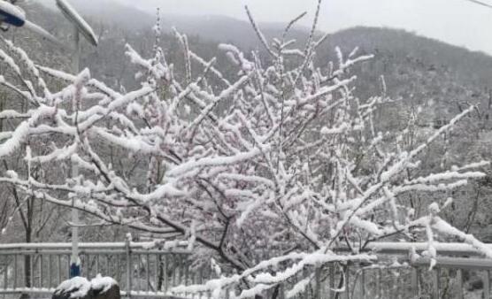 【好美】北京多地下雪怎么回事 北京哪里下雪了四月为什么会下雪