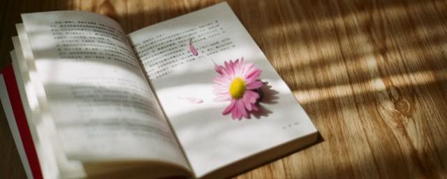 最美的时光小说结局 小说最美的时光最后怎样了
