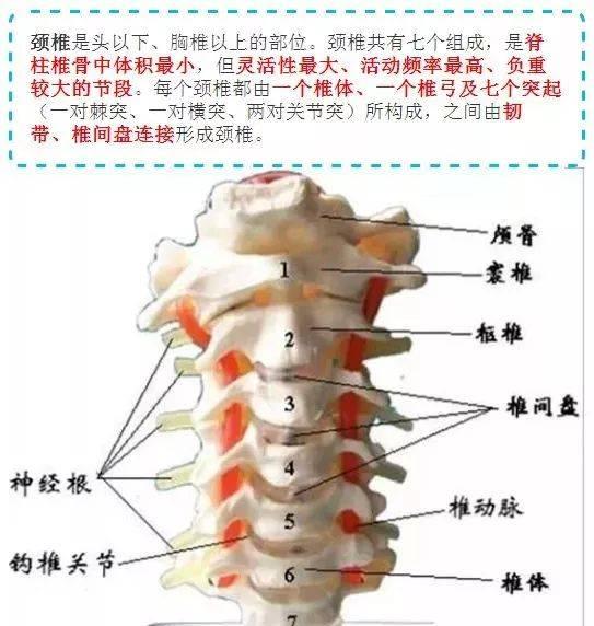 新版人体肌肉解剖彩图及说明!建议转发收藏!