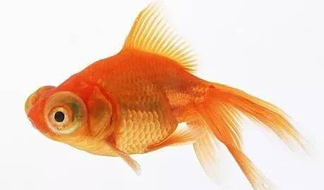 什么观赏鱼好看又好养?观赏鱼的种类及名称大全