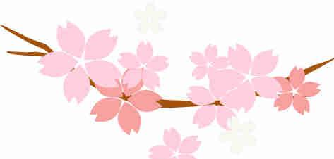 竹若:魔都最高性价比日料放题,吃到扶墙出,才不负大好春光!
