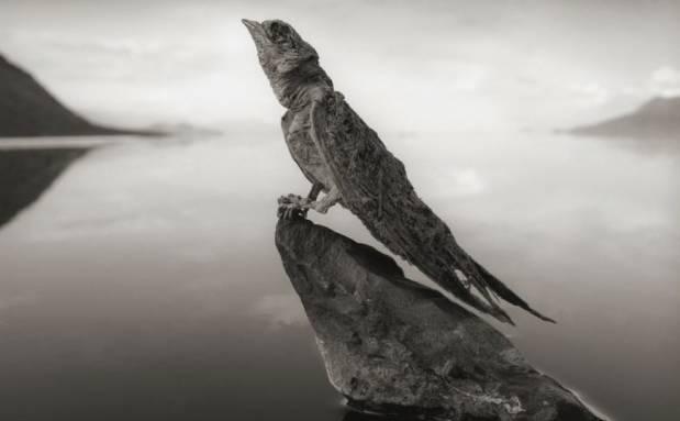 """为什么号称""""世界上真实存在的冥河""""的坦桑尼亚纳特龙湖,湖水却是红色的?"""