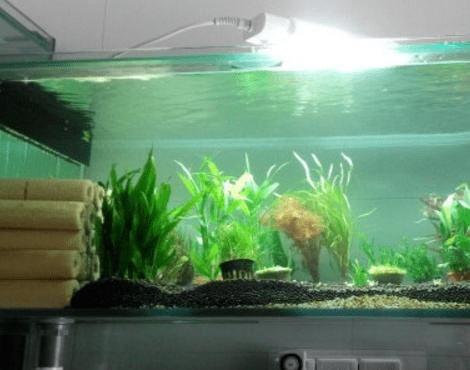 他用养鱼的水养花,一个月后,神奇的事情发生了!