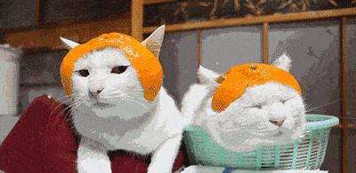 你的帽子只用来掩盖没洗头的事实?有了这些帽子怕是洗不洗都想戴了!