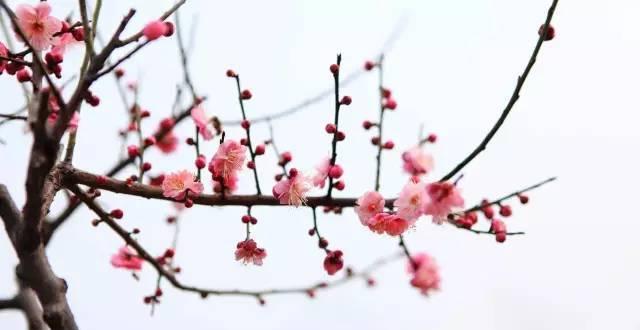 那些与梅花有关的诗词,哪一首动了你心?