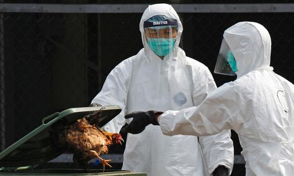 """香港一鸡档""""意外""""夏季被测出禽流感,昨起暂停出售活禽"""