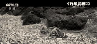 BBC纪录片《行星地球2》疑造假,群蛇围攻蜥蜴画面系合成