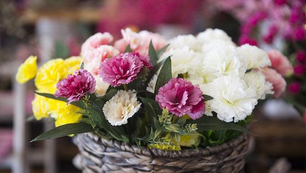 七夕送女朋友什么花好 除了玫瑰有些花寓意更有意义