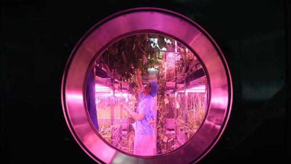 """""""月宫一号""""入选《自然》杂志2017年最佳科学图片"""