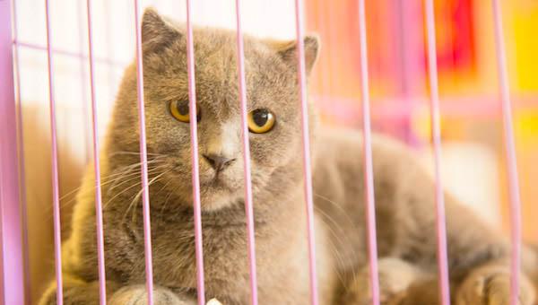 养猫会带来什么运气 风水上称猫咪守财还能自带阳气生气