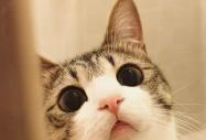 涨知识|十二生肖中为啥没有猫?