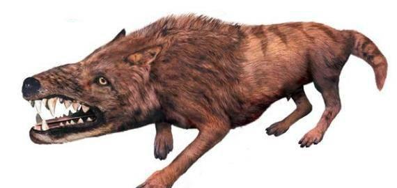 说出来,你敢信?鲸鱼的祖先竟然是一条狗!鲸鱼:这一定是假的!