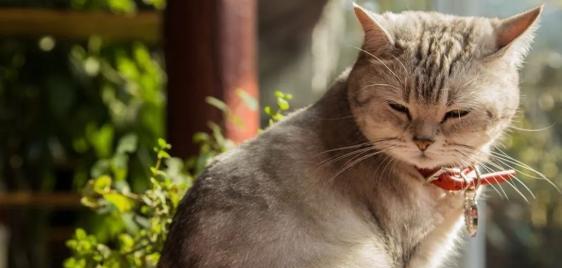陈化兰院士新发现:猫易感新冠病毒,可通过飞沫传播