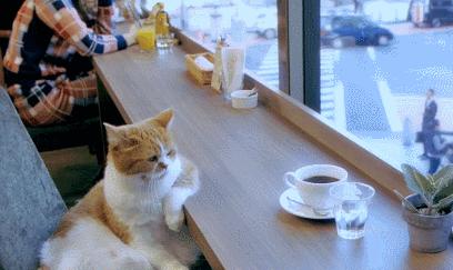 撸猫撸狗撸鸭抱小浣熊,才是有灵魂的咖啡伴侣