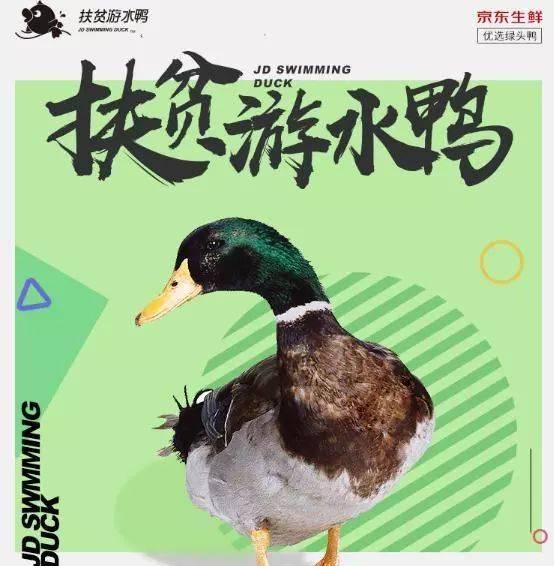 """提问:""""春江水暖鸭先知""""里面的""""鸭""""是什么鸭?"""