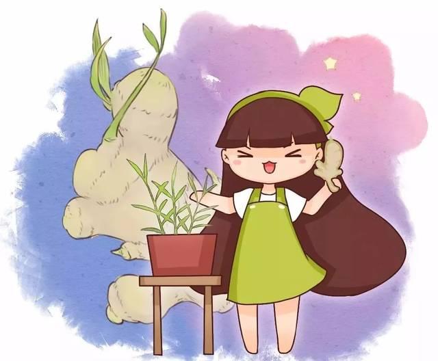来!种个生姜盆景吧~!