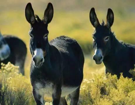 2018年肉驴养殖前景分析