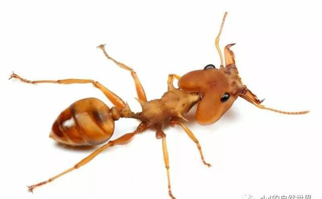 【蚁视界】浅谈如何饲养蚂蚁(一)