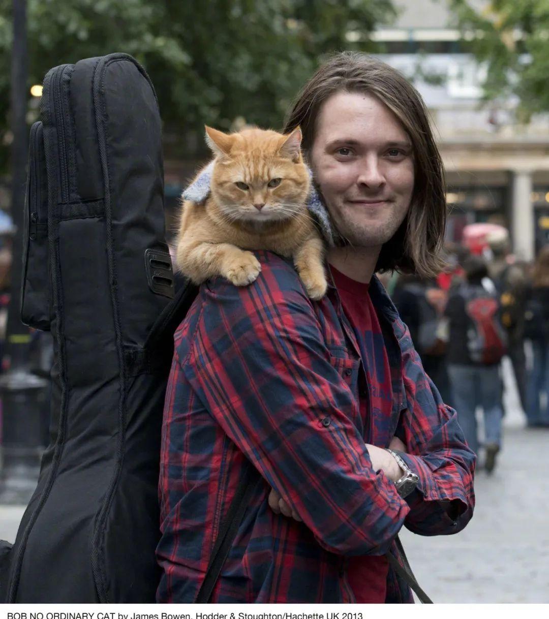 新闻丨天啊,流浪猫鲍勃去世