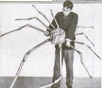 """日本""""杀人蟹""""袭击渔民?最大甲壳美味如何被造谣成恐怖生物"""