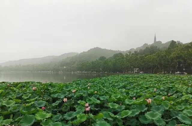 杭州到底啥时候出梅?今天太阳露面,明天大暴雨又来了