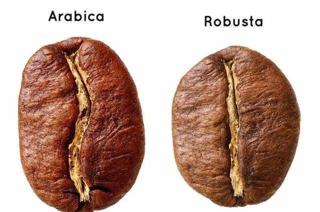 Evaluate | 你知道阿拉比卡和罗布斯塔有何区别吗?