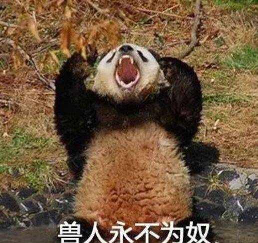 成为国宝前的大熊猫在几千年历史中是怎样的存在呢?