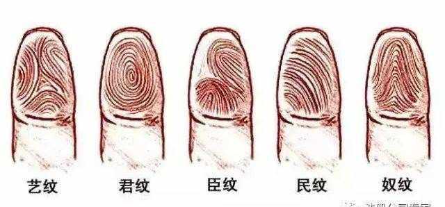 解析指纹斗与簸箕各代表的命运!