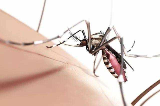 """为什么有些人特别""""招蚊子""""?"""