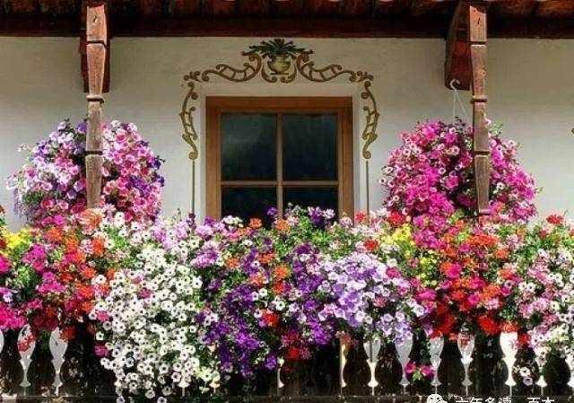 【幸福的种子】《自己的花是给别人看的》导读