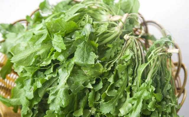 这几种野菜种植简单,不用管理就赚十几万,你为什么不种?