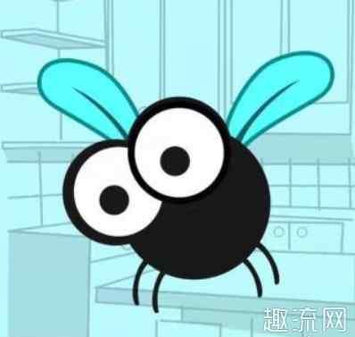 寄生蝇 苍蝇会传播新型冠状病毒吗 苍蝇会传播什么疾病