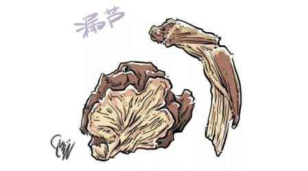 漏芦的功效与作用 中药漏芦的功效与作用 中药漏芦药效介绍