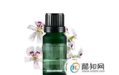 天竺葵精油的作用 天竺葵精油有哪些功效以及作用
